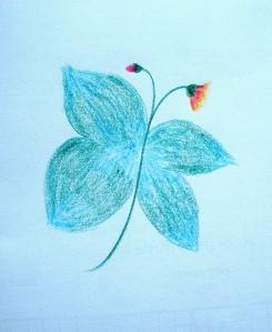 fluture-floare